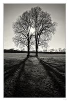--- Tree ---