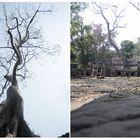 tree at Ta Prohm, Angkor