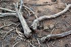 tree-bones X