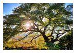 TREE (color version)