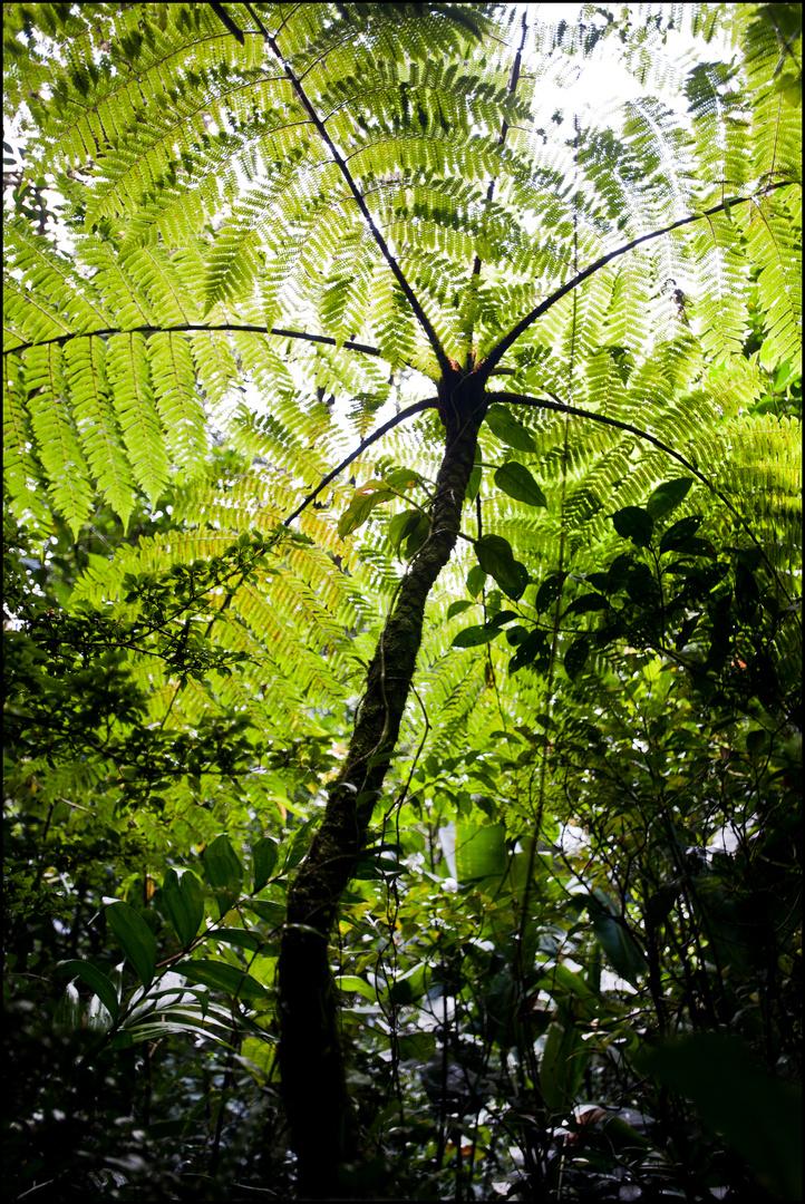 [ Tree Fern...]