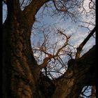 Tree from down up...