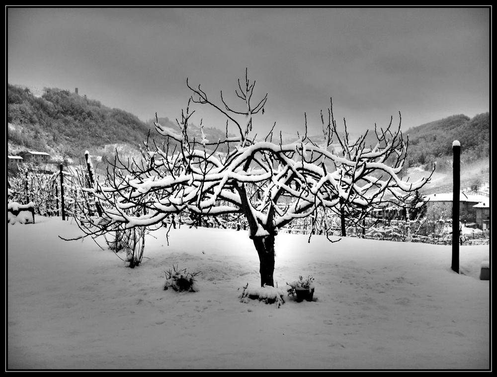 Tree Full Of Snow