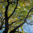 TREE GRAPHISM