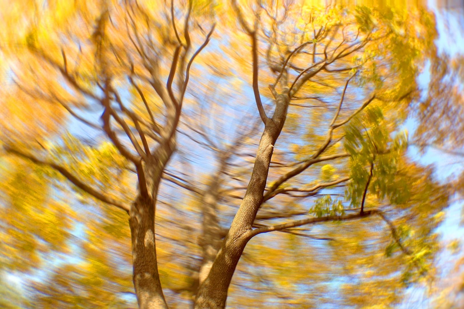 Tree in motion