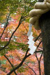 Tree in Shrine