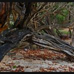 TREE IN THE BEACHES