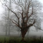Tree in the Mist 2