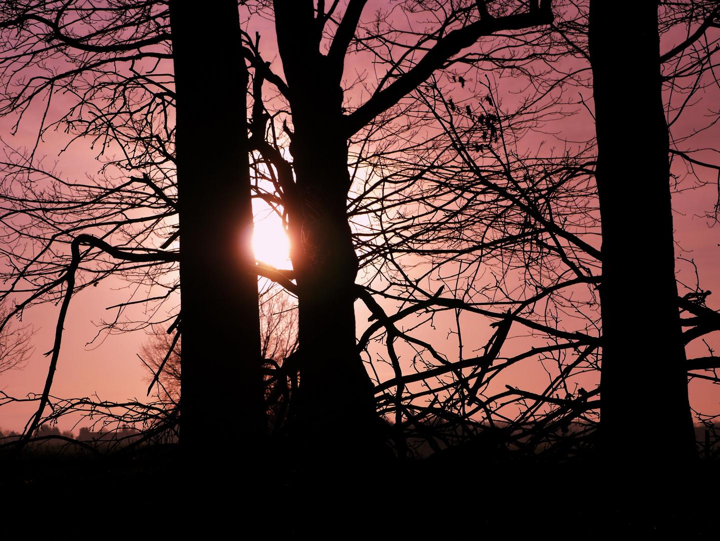 tree love romantic ....