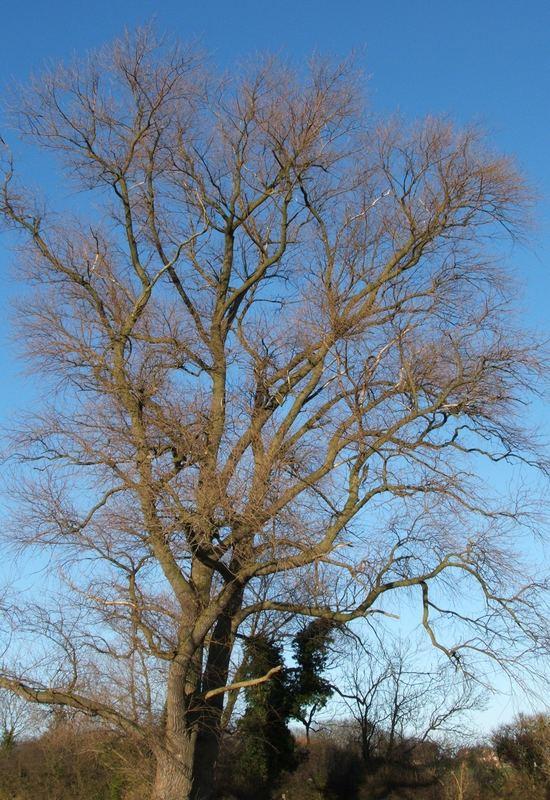 Tree-mendous!