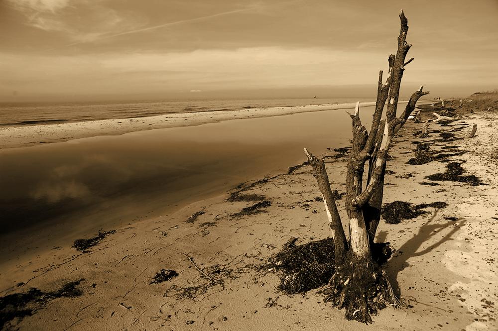 tree near the sea