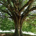 Tree of déjà Vu