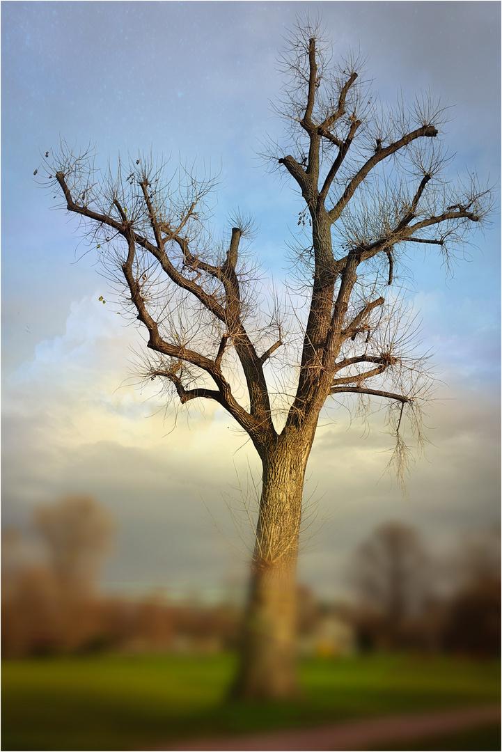 *** Tree of Life ***