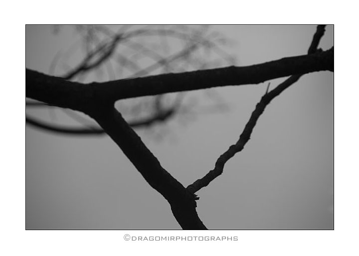 Tree One 3