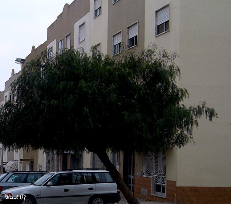 Tree to tumble