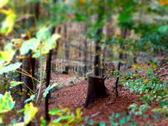 tree trunk in focus