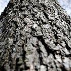 tree upwards