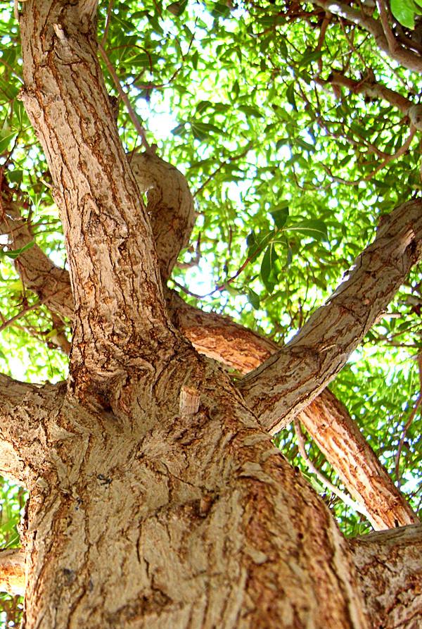 Treeٍ