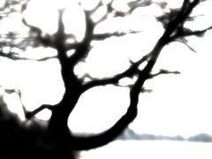 TreeEmotion