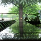 treeparty