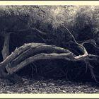 Treepoem