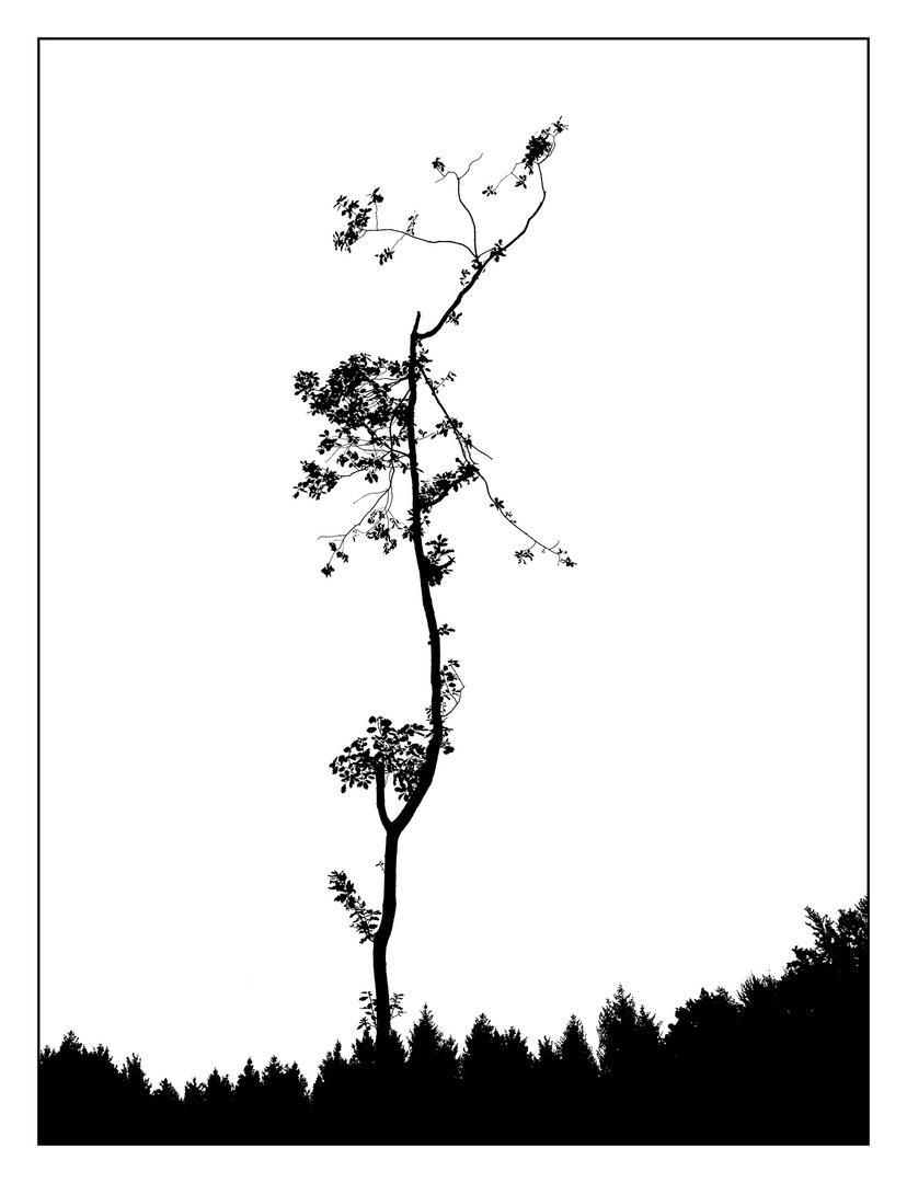 """Trees #3 """"Survival of the last leaf tree"""""""