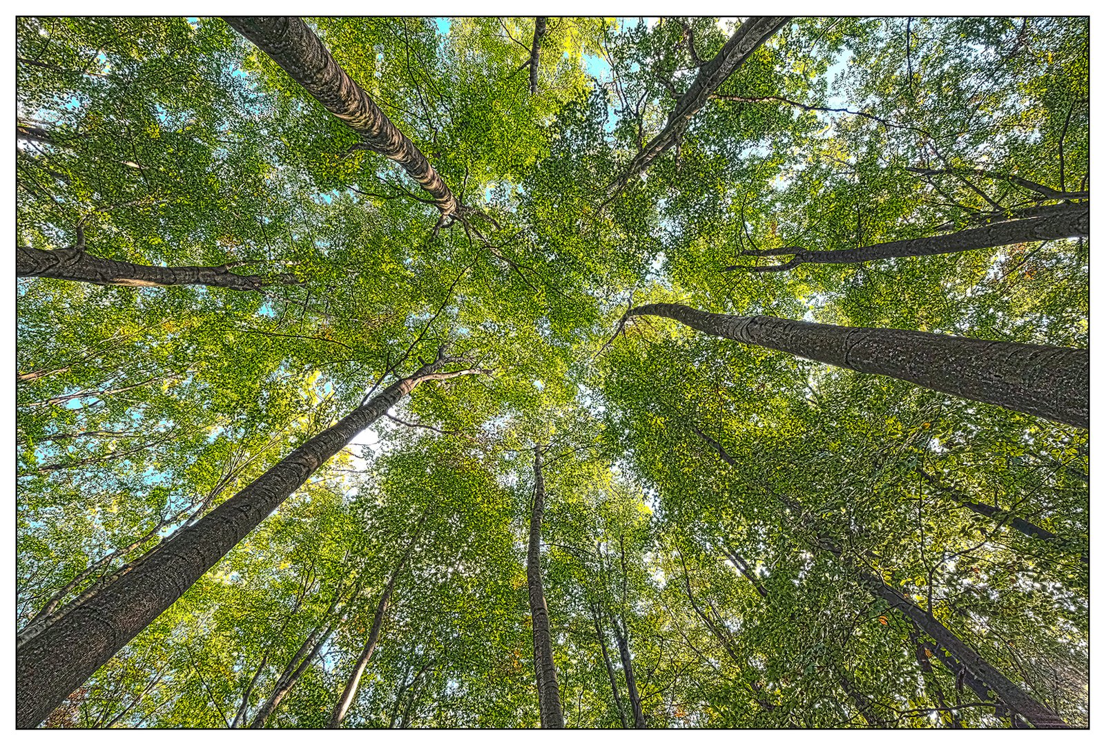 Trees #4