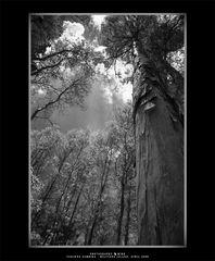 .:: Trees ::.