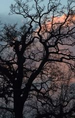 Trees and skys