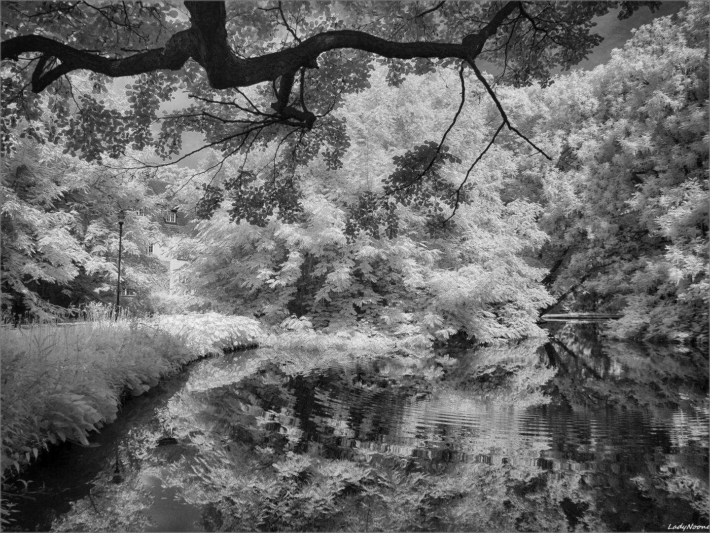 Trees and waters 3