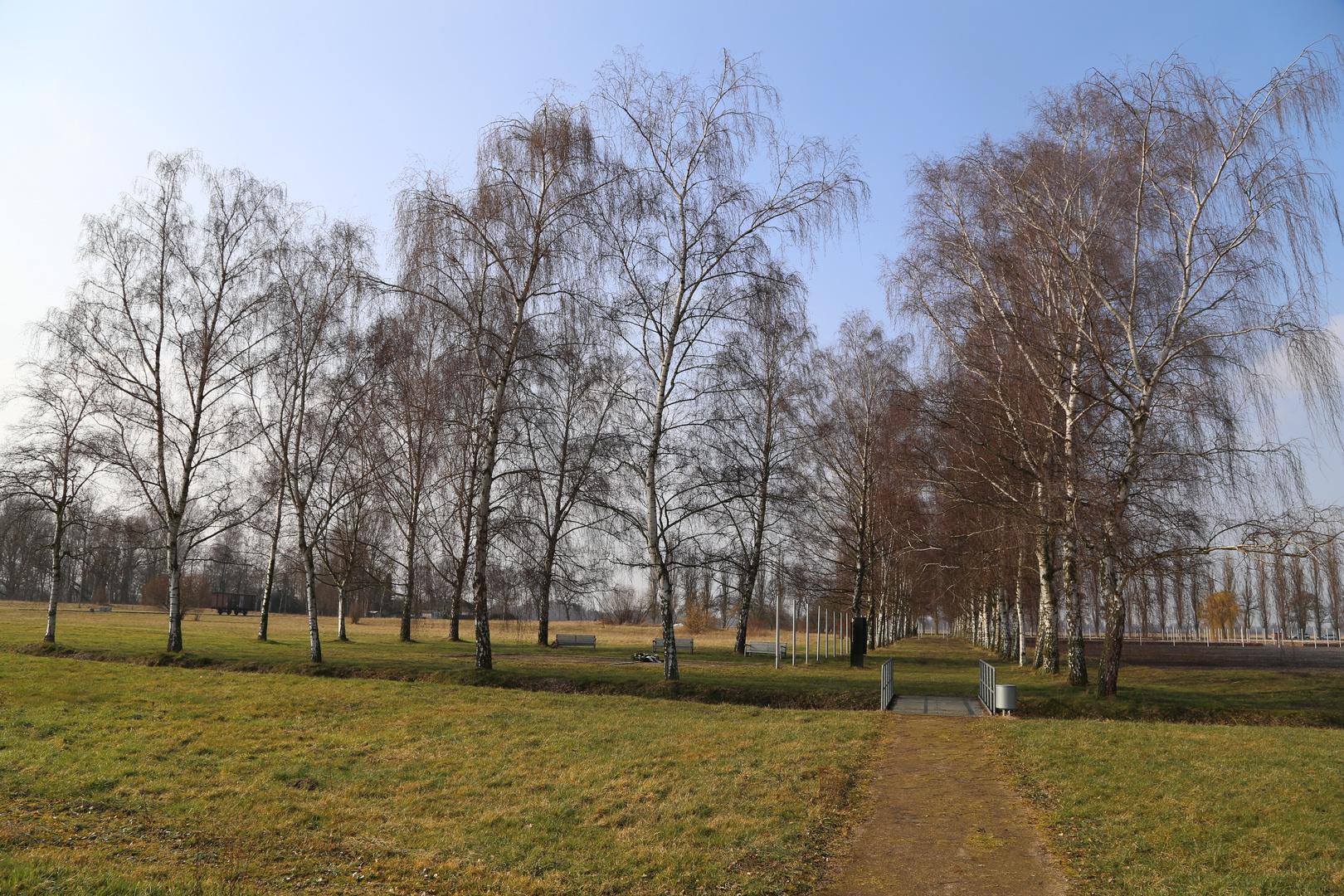 Trees at KZ Gedenkstätte Neuengamme