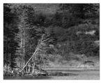 Trees (I/II)