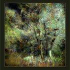 Tree's music