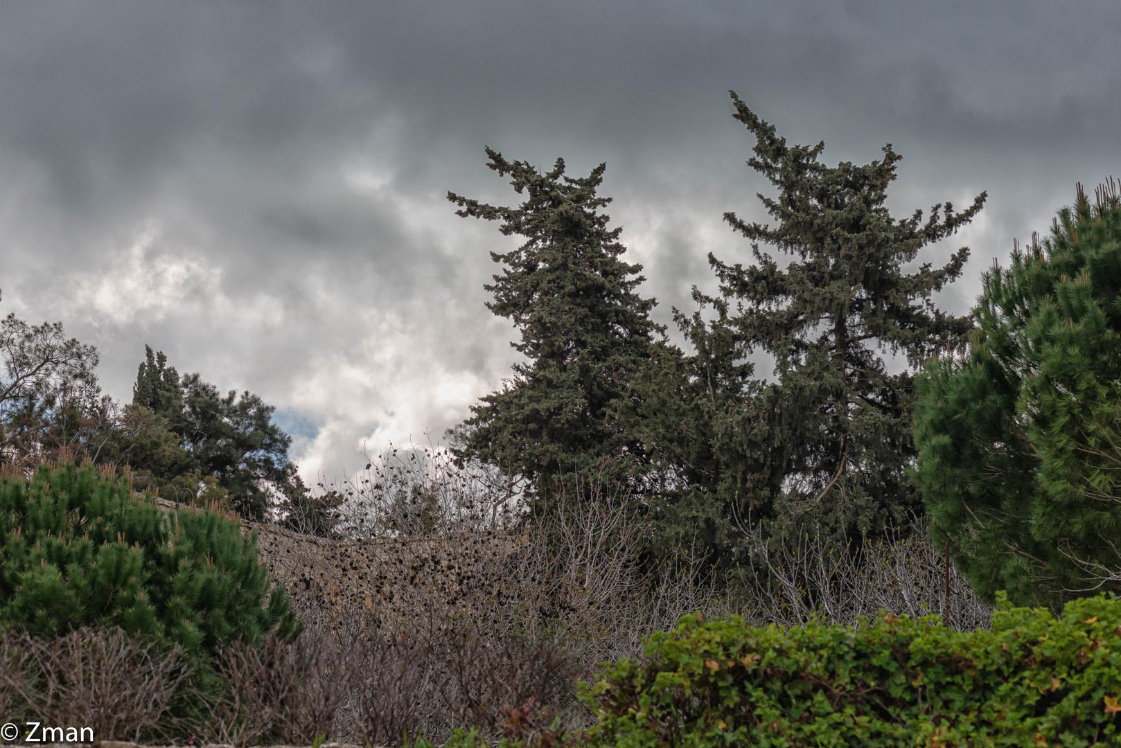 Trees PEO_5403-10