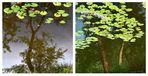 Trees tale