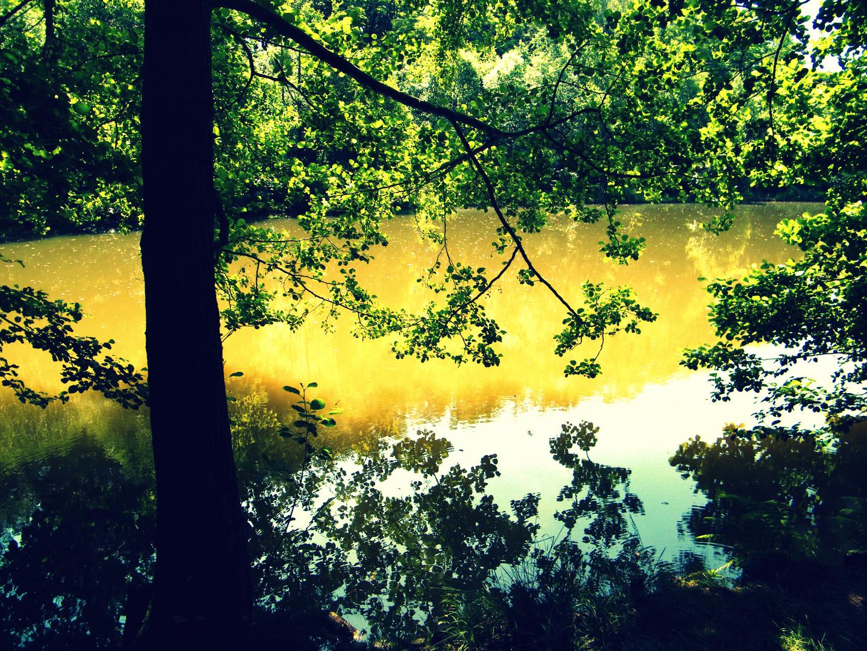 Tree's & water