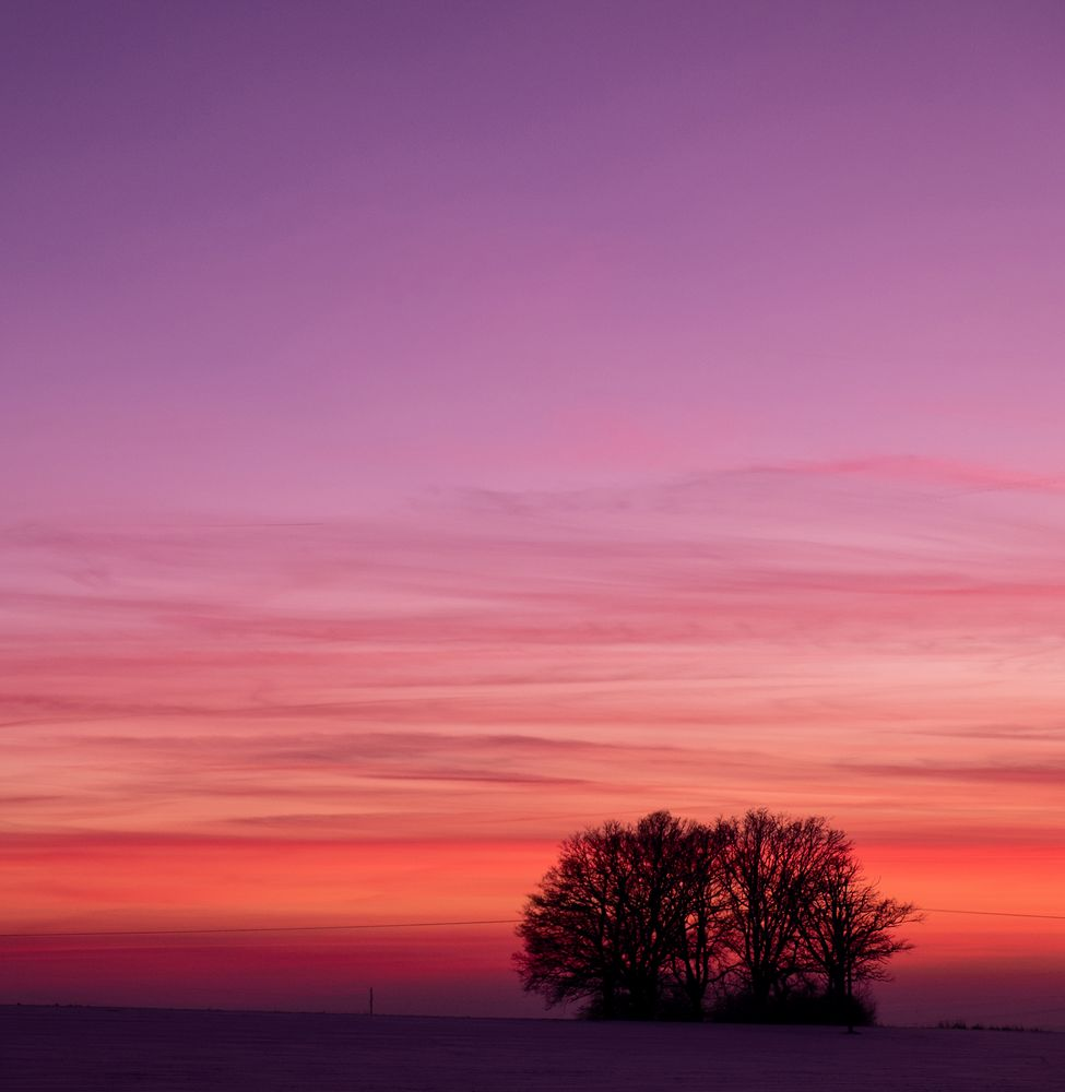 trees, winter, pink