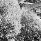 Trees...Windows...Reflections