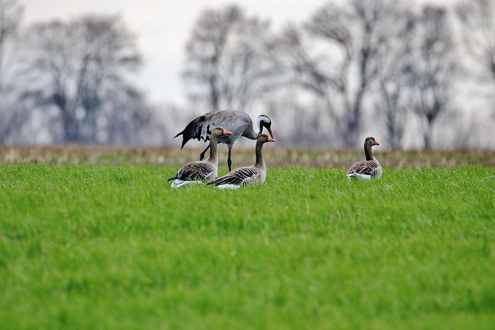 Treffen der Vogelverwandtschaft...