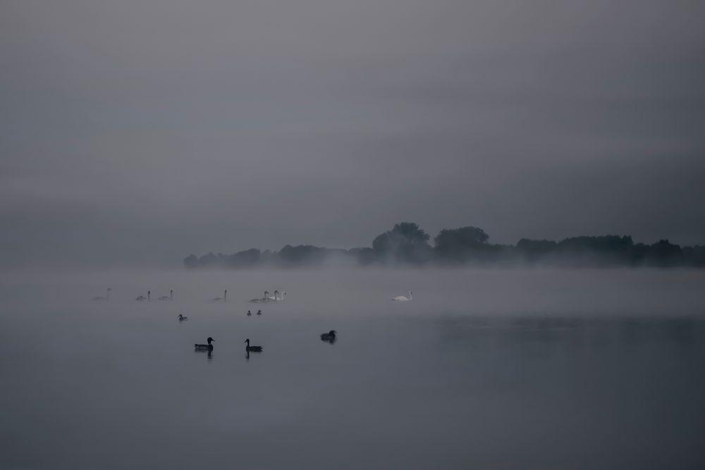 Treffen im Nebel