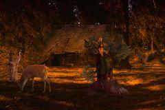 Treffen im Walde