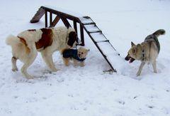 Treffpunkt Hundeschule 2009 - Na, wir werden doch nicht den Kleinen -