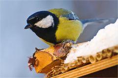 Treffpunkt Vogelhäuschen
