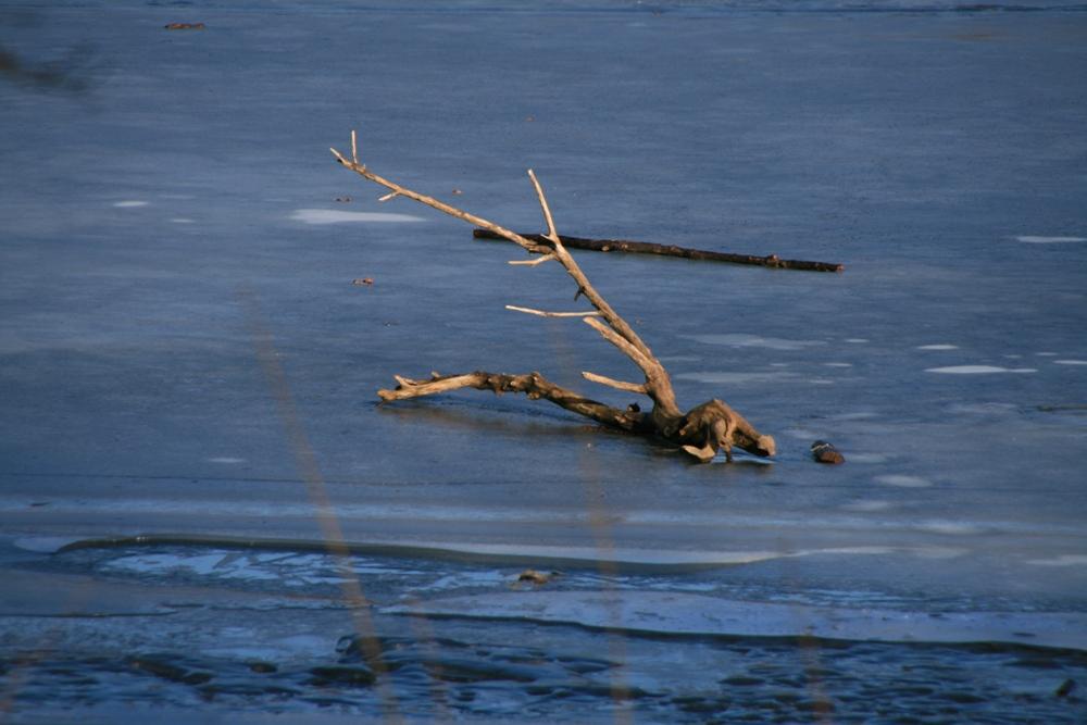 Treibgut auf Eis