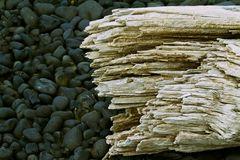Treibholz in Helinsandur