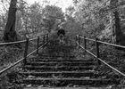 Treppe im Wald mit Model