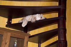 Treppenpennerin