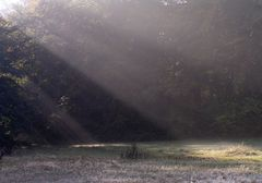 treptower park heut früh