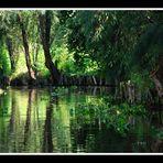 Très loin de chez moi, les canaux de Xochimilco