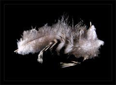 Tres plumas -Drei Federn